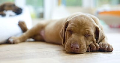 A Dog's Life: Choosing the Right Home for Your Pet