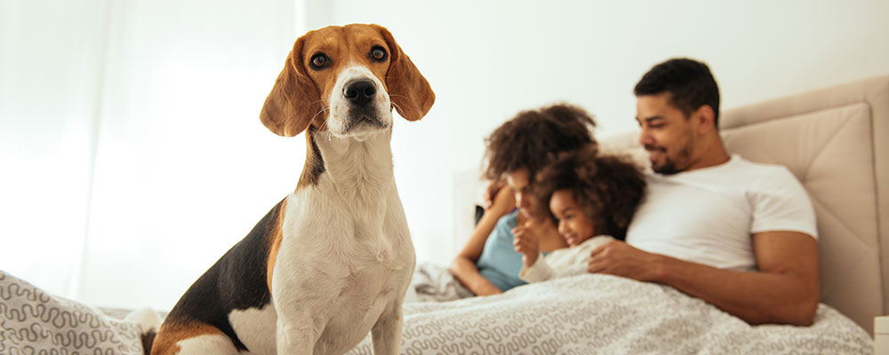 Transitioning to a New Home with Your Beloved Dog