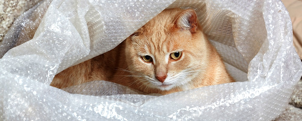 orange cat in bubble wrap