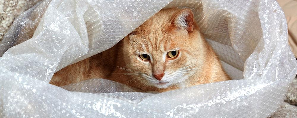 orange cat in bubble wrap
