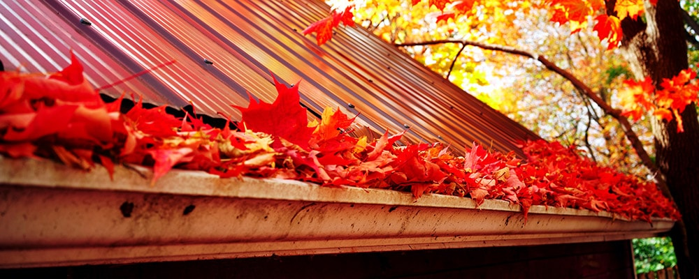 fall leaves rain gutter