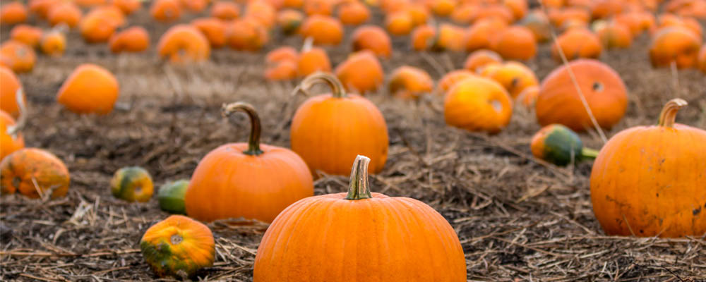 Grow Your Own Pumpkin Patch