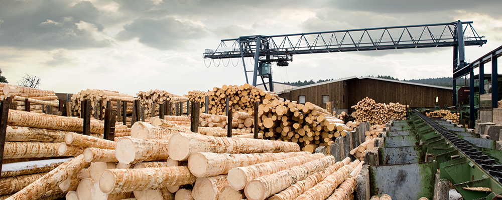 Lumber | Homebuilders Optimistic Despite High Lumber Prices
